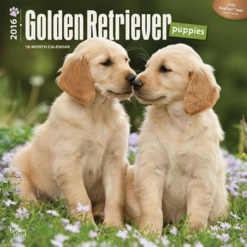 Calendar 2017 Golden Retriever Puppies