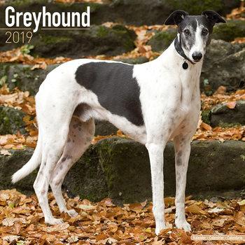 Calendar 2019  Greyhound