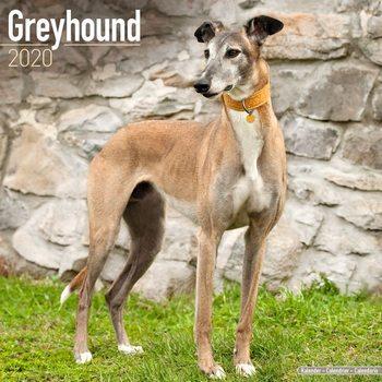 Calendar 2020  Greyhound
