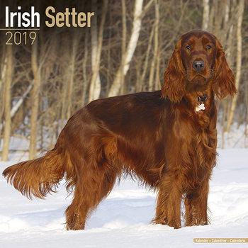 Calendar 2019  Irish Setter
