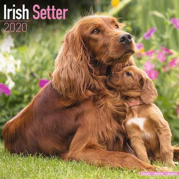 Calendar 2020  Irish Setter