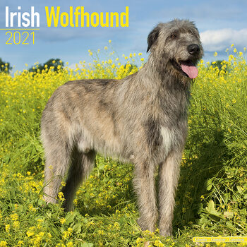 Calendar 2021 Irish Wolfhound
