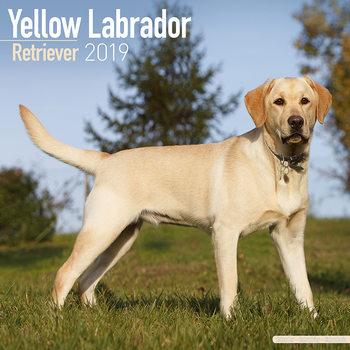 Calendar 2019  Labrador Ret (Yellow)