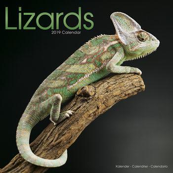 Calendar 2019  Lizards