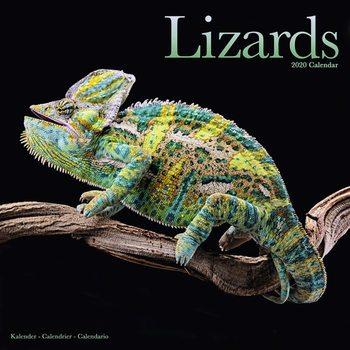 Calendar 2020  Lizards