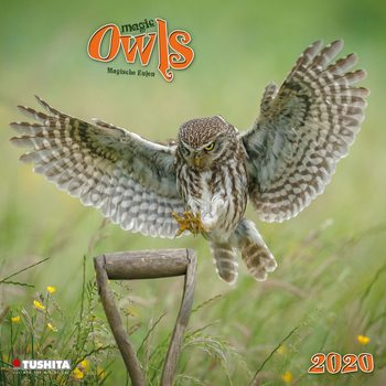 Calendar 2020  Magic Owls