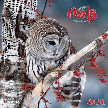 Calendar 2021 Magic Owls