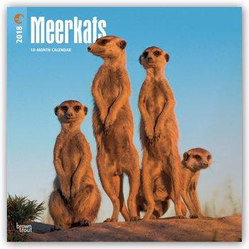 Calendar 2018 Meerkats
