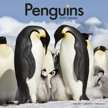 Calendar 2019  Penguins