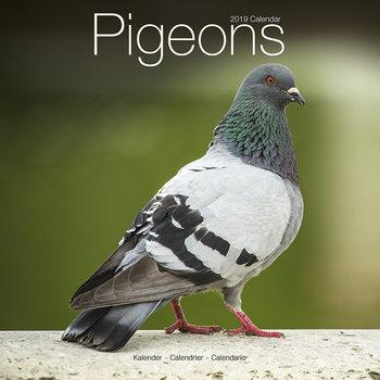 Calendar 2019  Pigeons