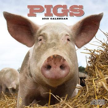Calendar 2019  Pigs