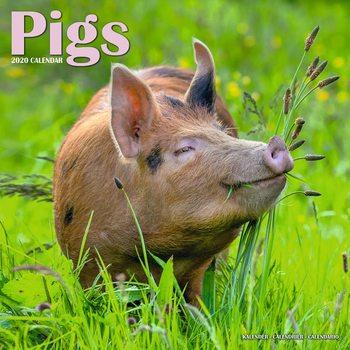 Calendar 2020  Pigs
