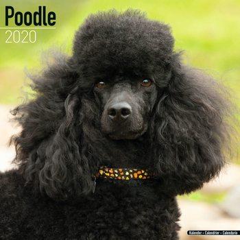 Calendar 2020  Poodle