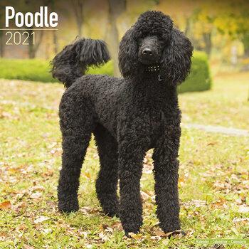 Calendar 2021 Poodle