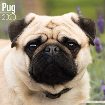Calendar 2020  Pug