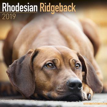 Calendar 2019  Rhodesian Ridgeback
