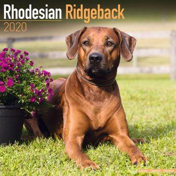 Calendar 2020  Rhodesian Ridgeback