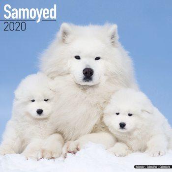 Calendar 2020  Samoyed