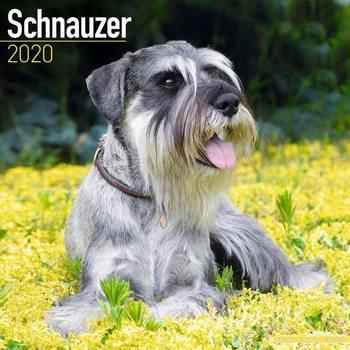 Calendar 2020  Schnauzer