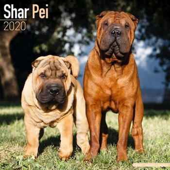 Calendar 2020  Shar Pei