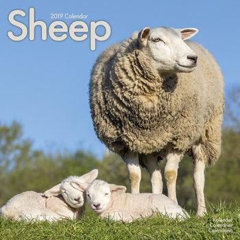 Calendar 2019  Sheep