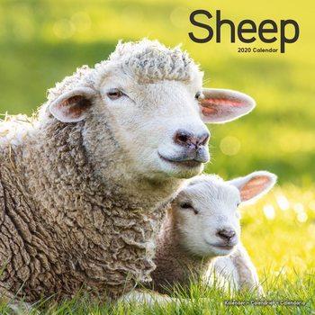 Calendar 2020  Sheep