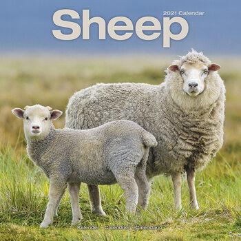 Calendar 2021 Sheep