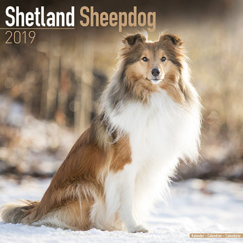 Calendar 2019  Shetland Sheepdog
