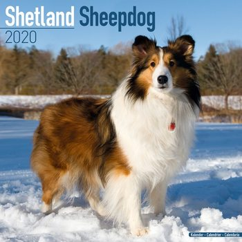 Calendar 2020  Shetland Sheepdog