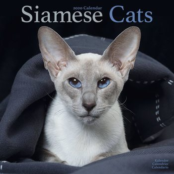 Calendar 2020  Siamese
