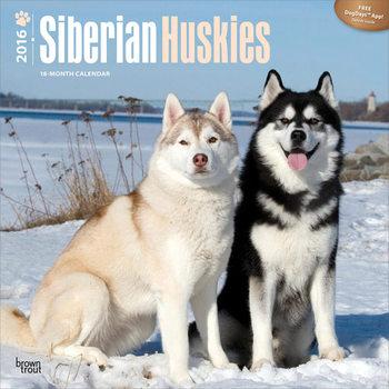 Calendar 2017 Siberian Huskies