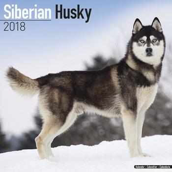 Calendar 2018 Siberian Husky