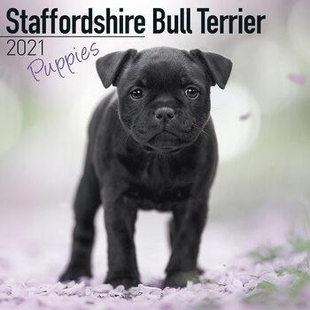 Calendar 2021 Staffordshire Bull Terr