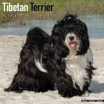 Calendar 2020  Tibetan Terrier