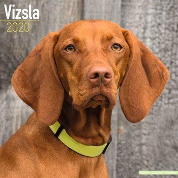Calendar 2020  Vizsla