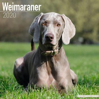 Calendar 2020  Weimaraner