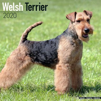 Calendar 2020  Welsh Terrier