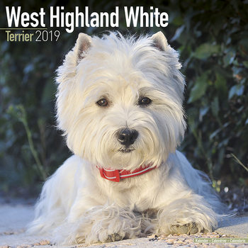 Calendar 2019  West Highland Terrier