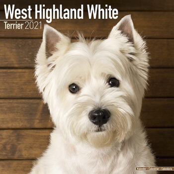 Calendar 2021 West Highland Terrier