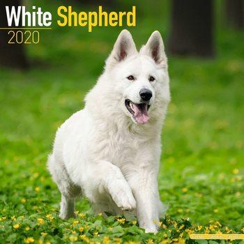Calendar 2020  White Shepherd