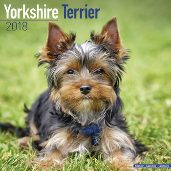 Calendar 2018 Yorkshire Terrier
