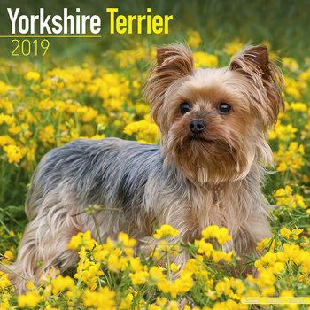 Calendar 2019  Yorkshire Terrier