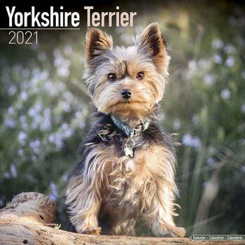 Calendar 2021 Yorkshire Terrier