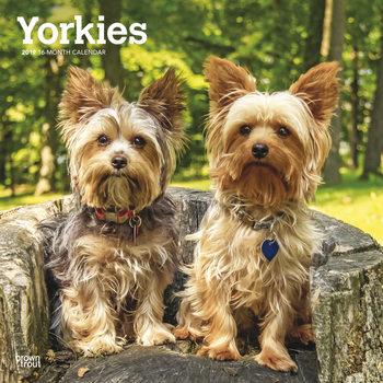 Calendar 2020  Yorkshire Terriers - International Edition