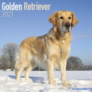Calendário 2021 Golden Retriever