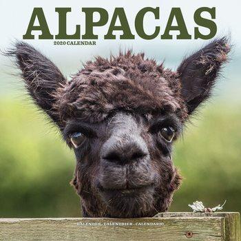 Calendário 2020  Alpacas