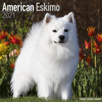 Calendário 2021 American Eskimo