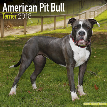 Calendário 2018 American Pit Bull Terrier