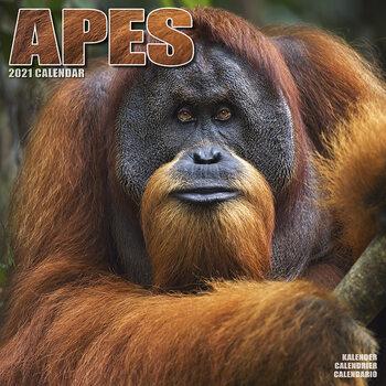 Calendário 2021 Apes