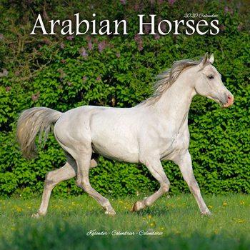 Calendário 2020  Arabian Horses